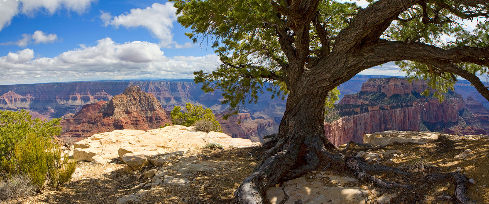 North Rim of the Grand Canyon photo